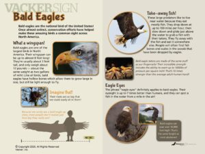 NW-9 Bald eagle outdoor nature sign