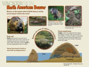 NW-11 American Beaver outdoor nature sign