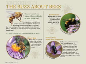 Standard Buzz About Bees interpretive sign