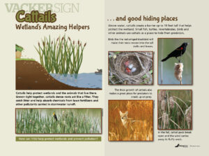 Wetland Cattail Nature Education Sign
