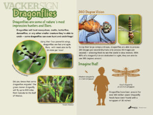 Dragonfly Nature Education Sign