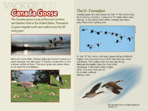 Canada Goose Nature Education Sign