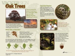 NW-10 Oak tree outdoor nature sign