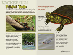 Painted Turtle Nature Education Sign
