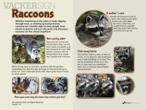 NW-12 Raccoon outdoor nature sign