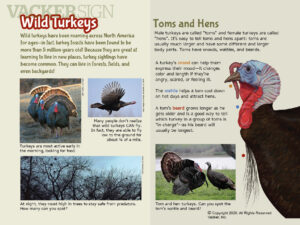 Wild Turkey Nature Education Sign