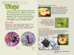 Wasp Outdoor Education Sign