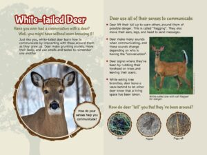 White-tailed Deer Nature Education Sign